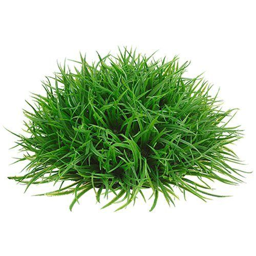 4'Hx8'W Wild Grass Half Ball-Shaped Artificial Topiary -Green (pack of 12) >>> Read more reviews of the product by visiting the link on the image.