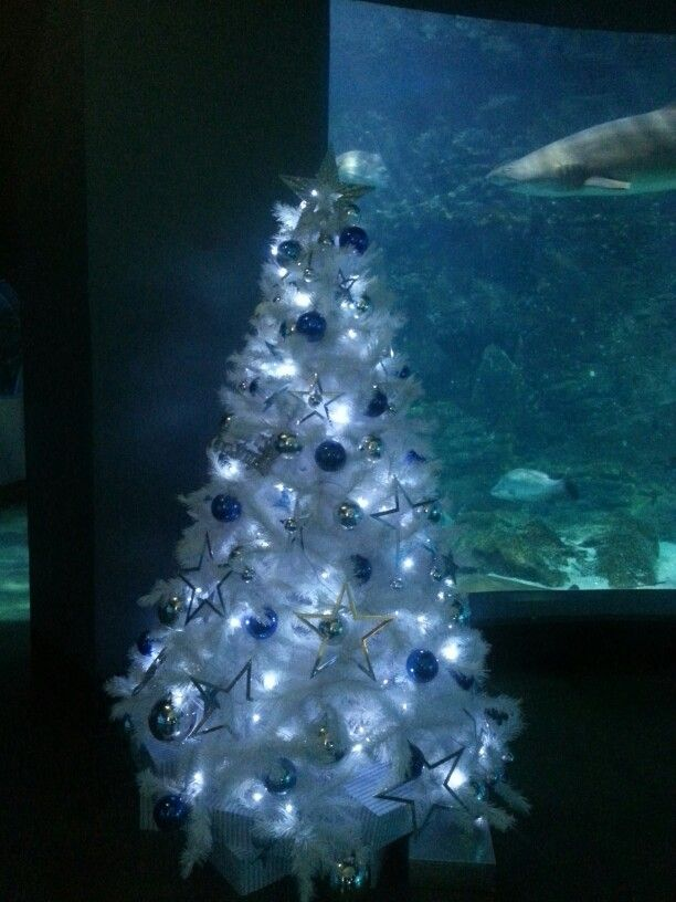 White, blue and silver Christmas tree in the Melbourne Acquarium.  From celebratingchristmas.com.au