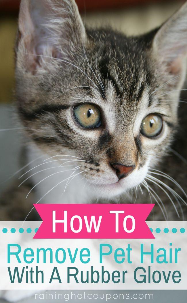 Best 25+ Remove pet hair ideas on Pinterest