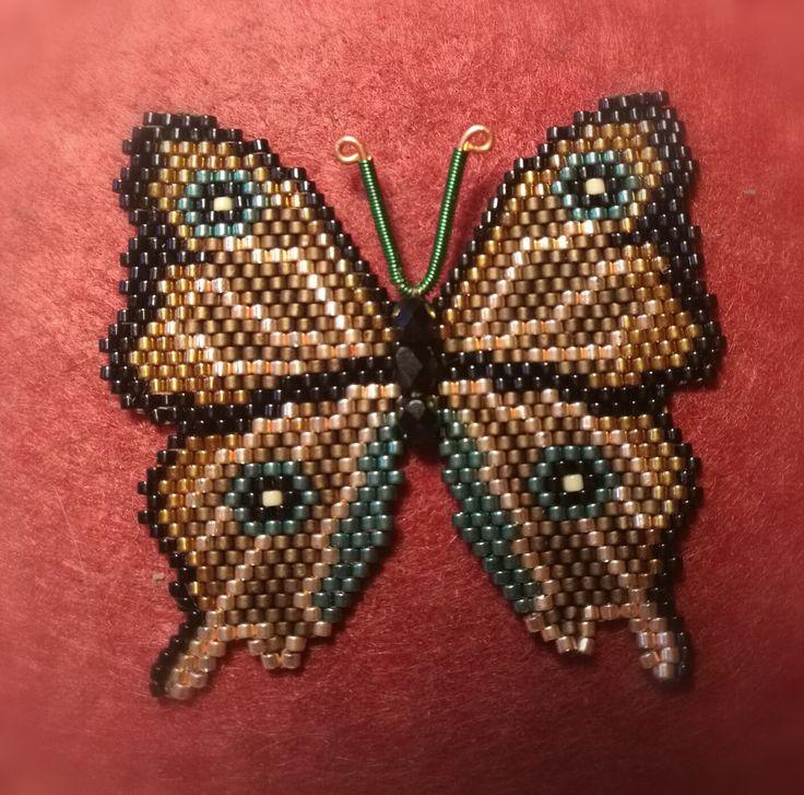 Első pillangóm