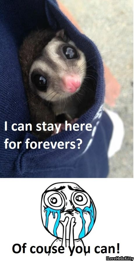 .Yep this is basically what happened when we got the sugar gliders. LOL.