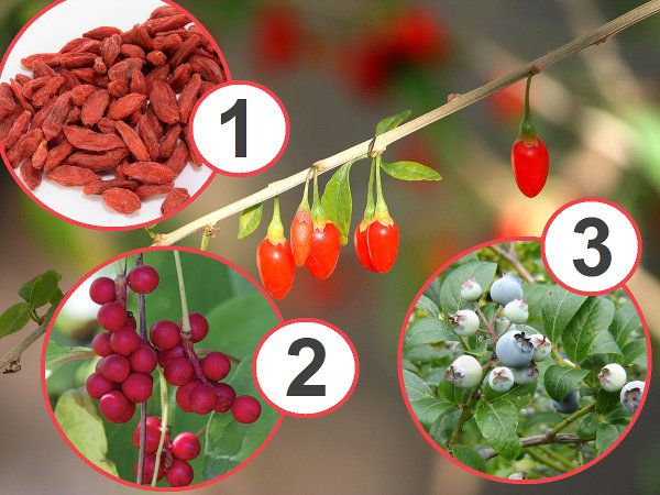 Najzdrowsze Owoce Swiata Fruit Trees Garden Shrubs