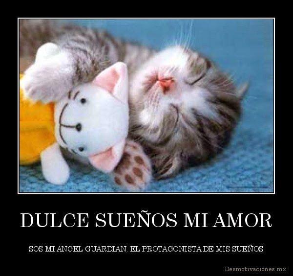 Dulces Suenos Mi Amor Descansa Te Quiero Imagenes De Feliz Noche Imagenes Tiernas Fondos D Gatitos Adorables Humor Divertido Sobre Animales Animales Bebes