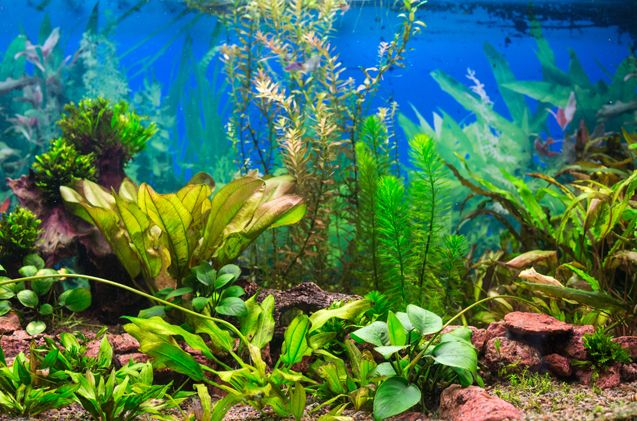 Before adding extra CO2 to your tank, make sure you know its pros and cons.