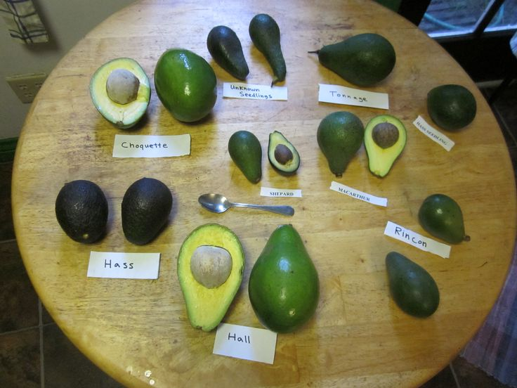 Know Your Avocado Varieties And When They're In Season Our's are Hall Avocados