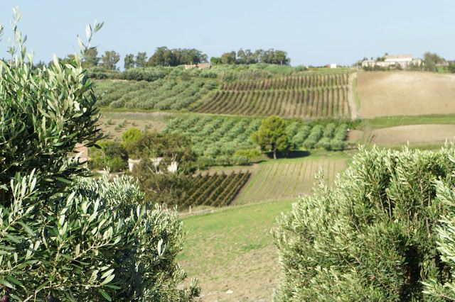 Staying at a vineyard in Sicily  www.planetaestate.it