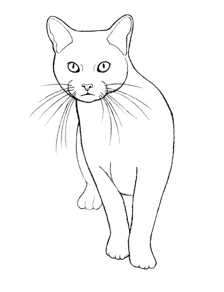 Line Drawing Of Cat : Best images about animals to color on pinterest cat