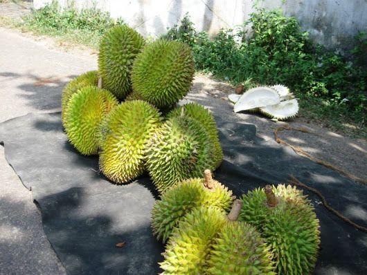 """Дурианы. Продают их, как правило, только на улице из-за их весьма своеобразного """"аромата"""" (Шри-Ланка)"""