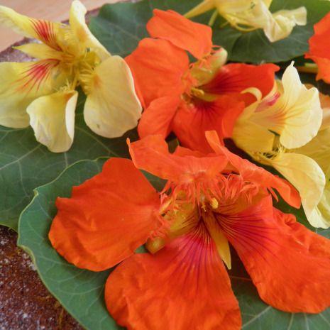 17 Best Images About Nasturtiums On Pinterest Gardens