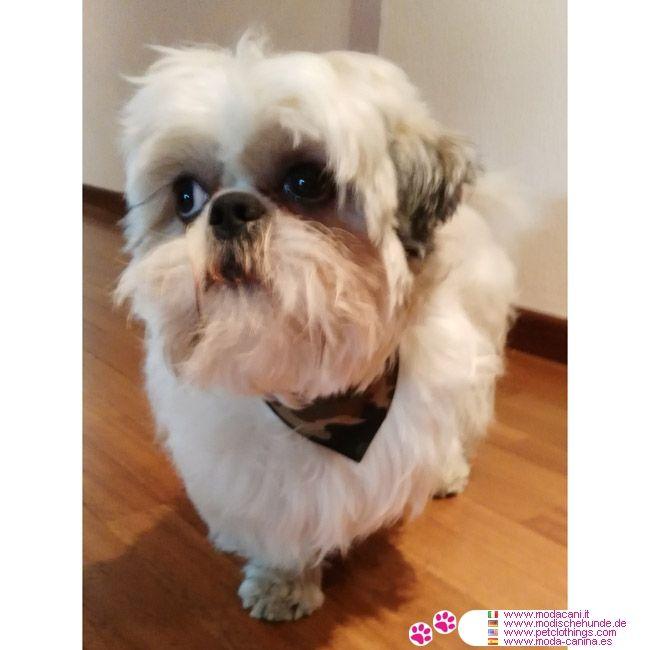 Collier Petits et Grands Chiens avec Bandana Camouflage Vert #VetementChiens #ShihTzu - Collier Noir de cuir d'imitation pour les petits chiens, chiens de moyennes et grandes tailles, avec bandana avec un motif Camouflage Vert