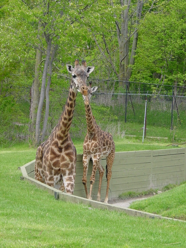 how to get to toronto zoo