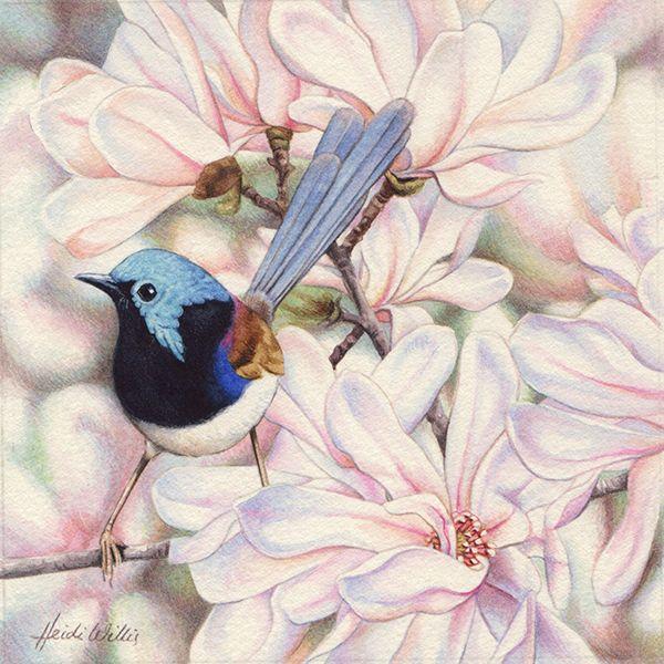 Heidi Willis - Variegated Fairy Wren and Magnolias Miniature