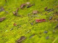 grow moss on pots