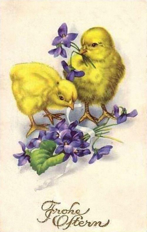 Старые открытки с цыплятами, поздравления днем