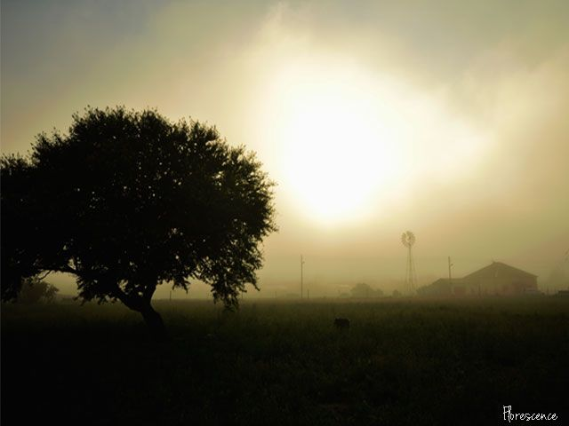 Misty sunrise, Sterkstroom, Eastern Cape, South Africa, January 2012, (c) Florescence