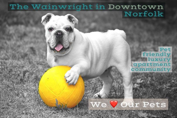 We Love Pets At The Wainwright In Downtown Norfolk Popular Dog