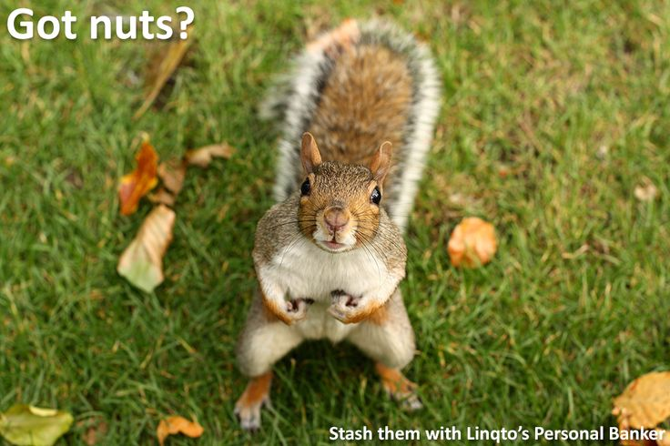 Stash your nuts with Personal Banker.