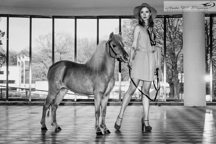FB: SSF A Gift of Joy to Remember  American Miniature Horse filly show equine photography fashion mare caballo pferd AMH amha
