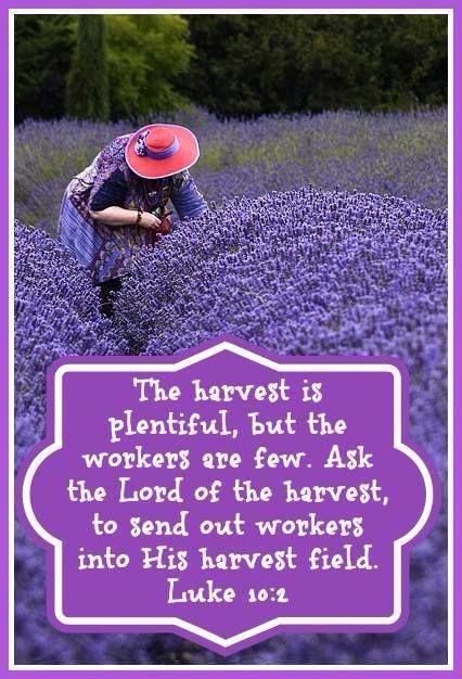 luke 10 1  the harvest is plentiful