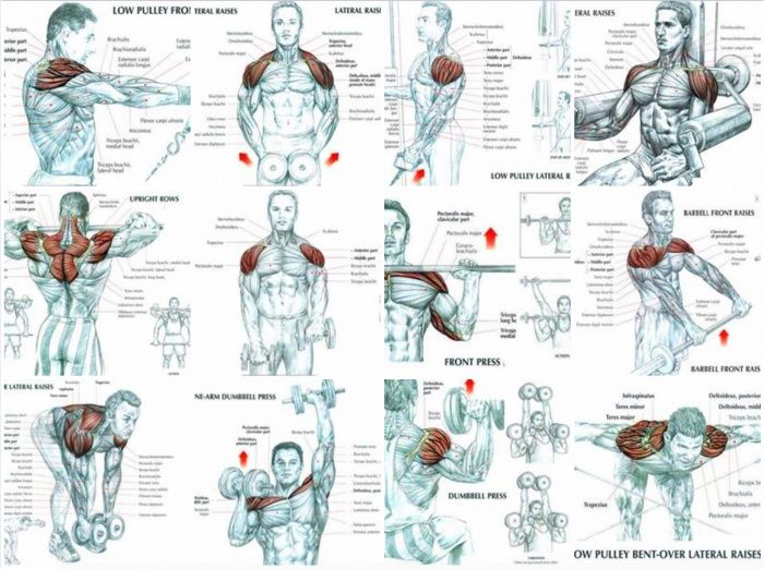 Best Of Shoulder Exercises - Healthy Fitness Training Plan Body - Yeah We Train !