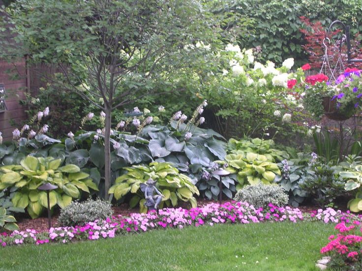 Hosta garden with serviceberry tree in the foreground for Plants around trees landscaping