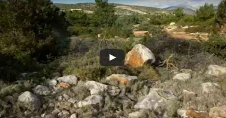 Εκπληκτικό βίντεο: «Αόρατοι» Έλληνες ελεύθεροι σκοπευτές Crazynews.gr