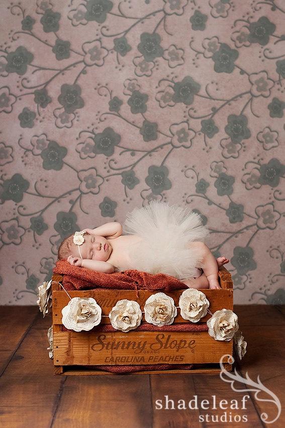 Little bella bebe! Making my garlands look amazing! Thank you shadeleaf studios!!: Amazing, Photo Ideas, Bella Bebe, Studios Ideas, Shadeleaf Studios, Photo Studios, Wedding Roses, Garlands, Photo Shoots