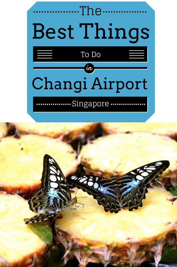From the butterfly garden to free massages, here are ten of the best things to do in Changi Airport, Singapore. It's easy to see why it's won hundreds of Best Airport in the World awards.