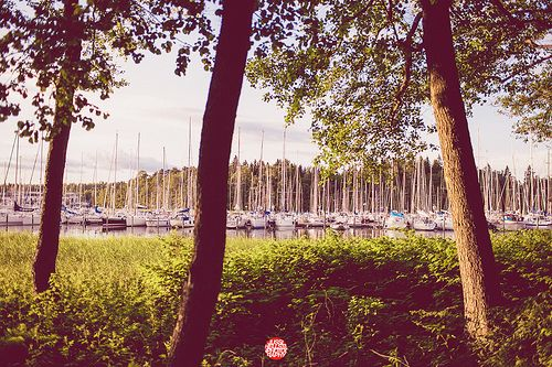 181/365 Three Trees