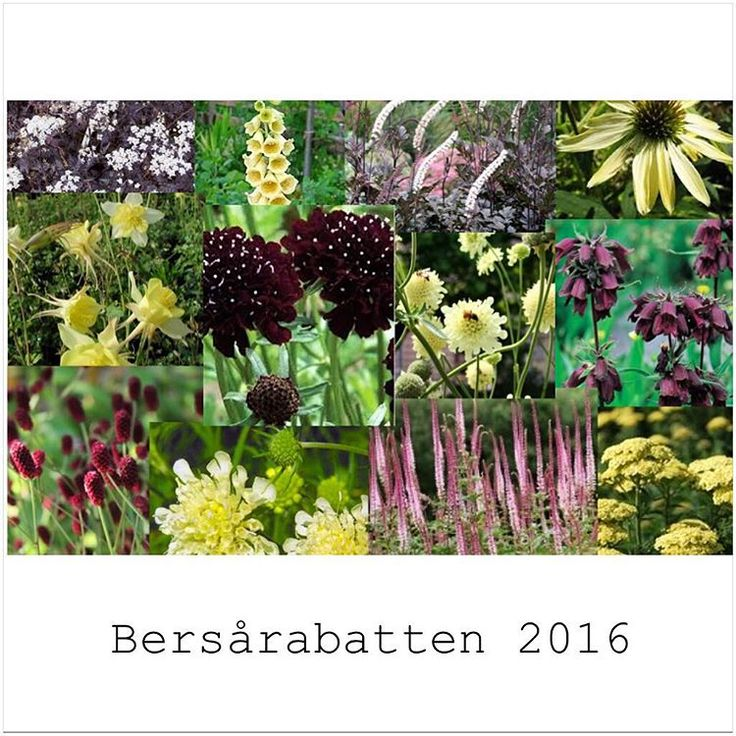#bersårabatten by @swedishgarden