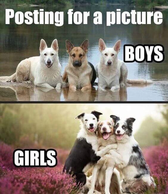 27 lustige Tier-Meme zum Lachen bis zum Umfallen 9   – Humor e memes