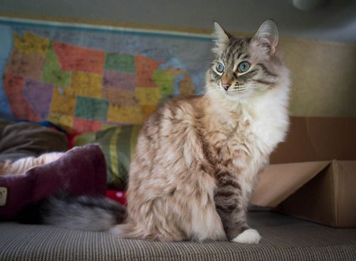 How to prepare your cat for full-time RV living