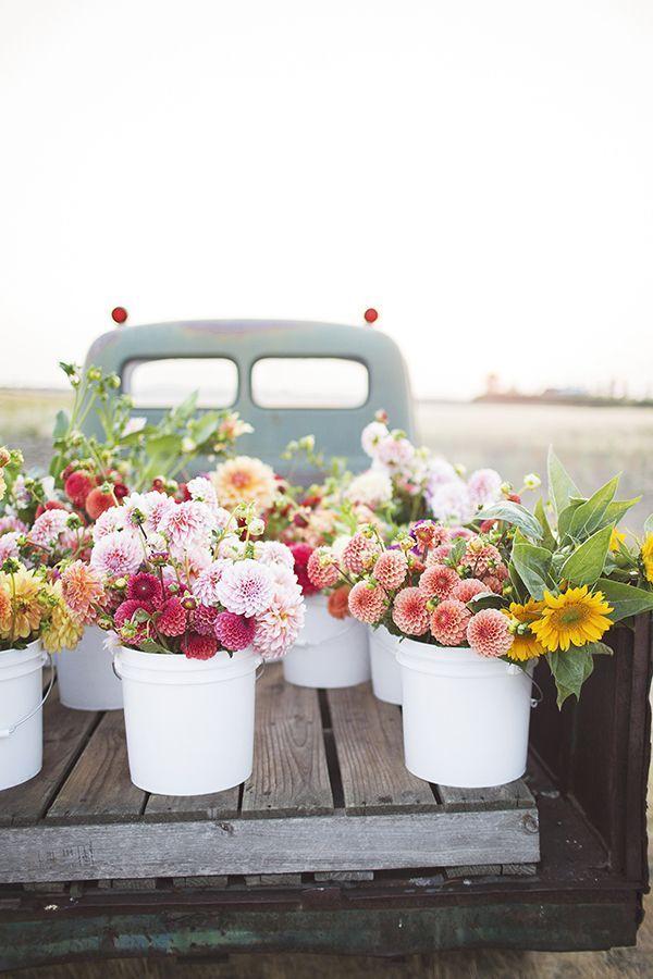 Truck Full Of Dahlias In 2020 Flower Truck Flower Farm Pretty Flowers