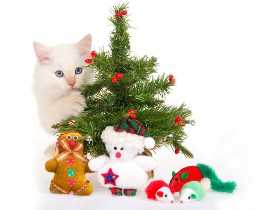christmas white cat: Christmas Parties, Desktop Backgrounds, Christmas Cat, Cat Cards, Christmas Decor, Christmas Trees, Merry Christmas, Christmas Hd, White Cat