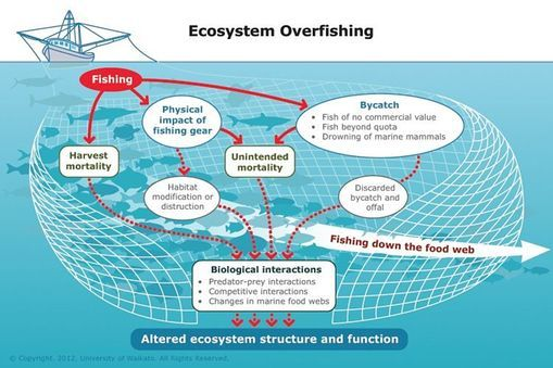 INFO SHEET: Human impacts on the Bay of Plenty - Coastal marine ecosystems balance on a fine ecological edge. They are dynamic and can easily be disturbe...