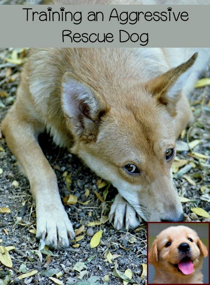 1 Have Dog Behavior Problems Learn About Dog Behavior