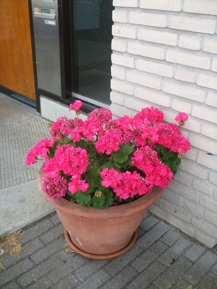 1000 Images About Plants And Flowers In Pots In The 400 x 300