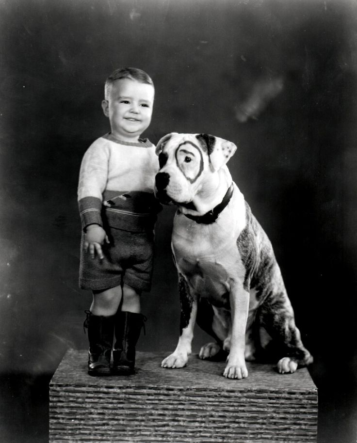 Little Rascals Movie Dog Breed