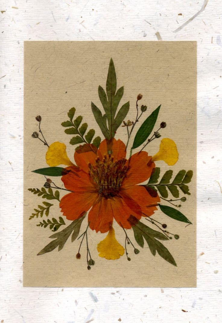about Pressed flowers on Pinterest | Flowers for sale, Dried flowers ...