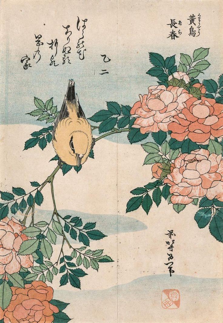 Lindsay   Drawing Japan with the Old Man Mad About Drawing   Katsushika Hokusai, Warber and Roses (Kôchô, bara), c. 1834