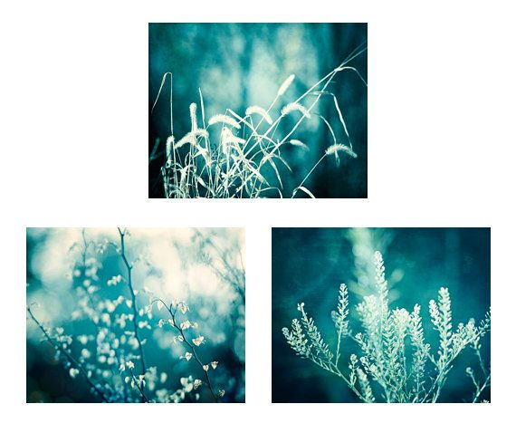 Teal Wall Art Set - A set of three modern nature photographs in dark teal tones. Sign up for FREE Decor Color Schemes inspired by my best-selling