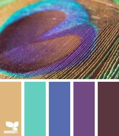 Peacock blue, purple and more: colour / color palette inspiration. Peacock feathers are one of my favorite things. I love these colors.