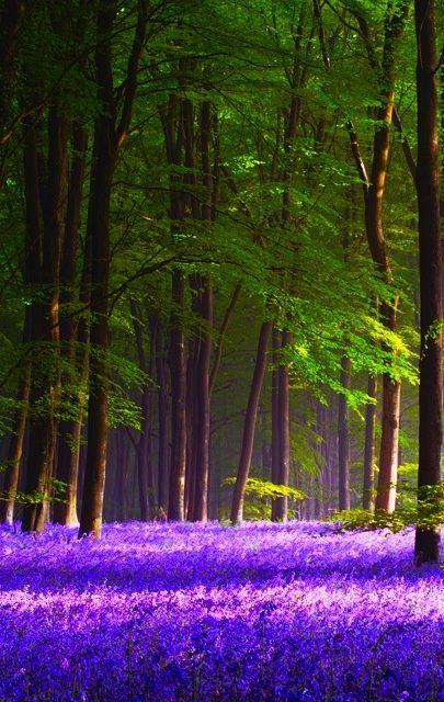 enchanted forests purple-purple-purple-purple-purple-purple