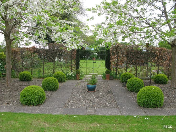 Buxus domes and Prunus avium Plena in blossom