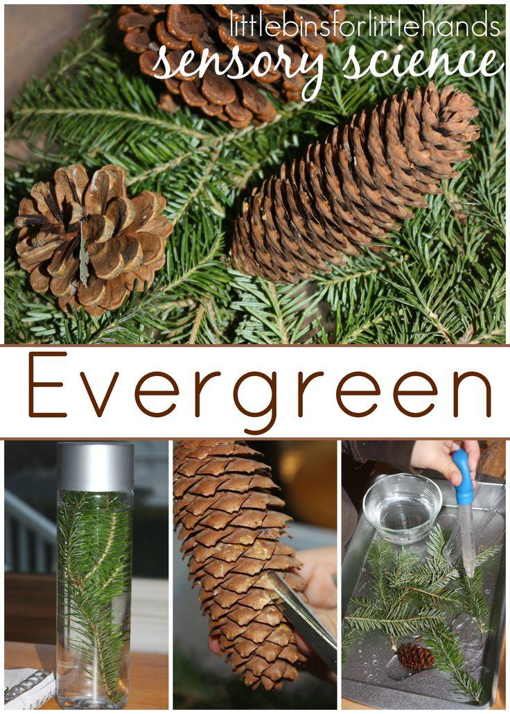Evergreen Science Preschool Nature Science Exploration