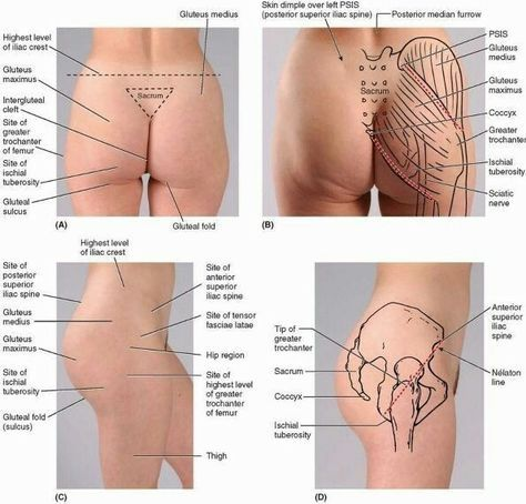 18 best Drawing Reference - Anatomy - The Hip images on Pinterest ...