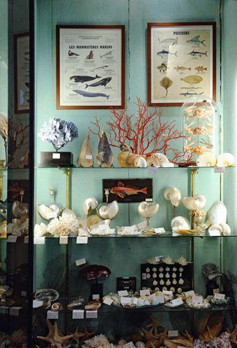 Des objets pour un cabinet de curiosités                                                                                                                                                                                 Plus