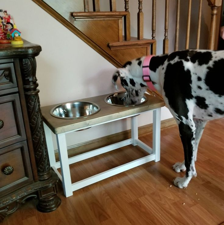 Elevated dog bowls for large or extra large dog great