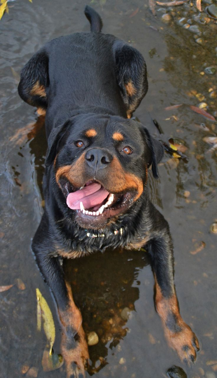 best pet training tips and ideas with pettrainersnow images on