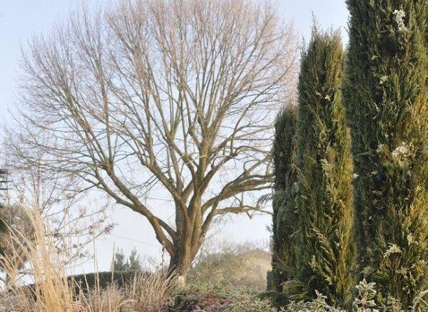 Los árboles caducifolios y el invierno 1